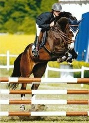 Deutsches Sportpferd Pferd