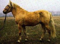 Banker Horse Horse