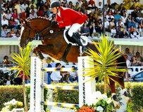 Zweibrücker Horse