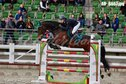 ***8y.o mare for showjumping***