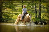 Beautiful Palomino Family Gelding Ranch Experience Trail Horse