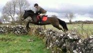 16.2 2010 irische Sportpferd
