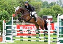 KWPN Pferd