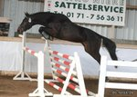 La Quitol young gelding by 2010, focus jumping