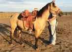Dun Quarterhorse Stute zu verkaufen